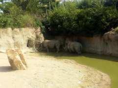 rinoceronti acqua